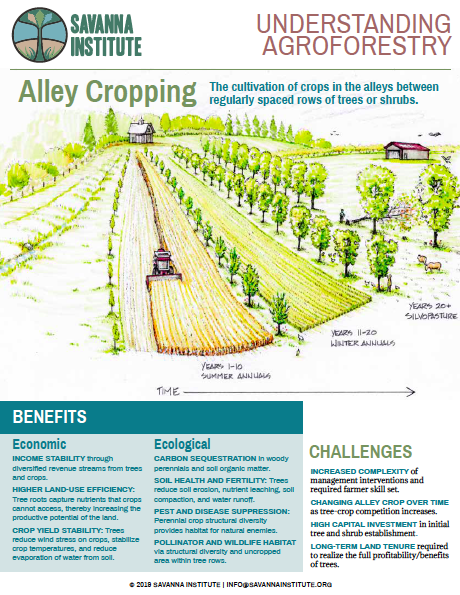 Alley Cropping Infographic image