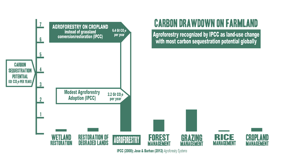 a graph comparing strategies for carbon drawdown