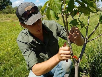 apprentice working on a tree