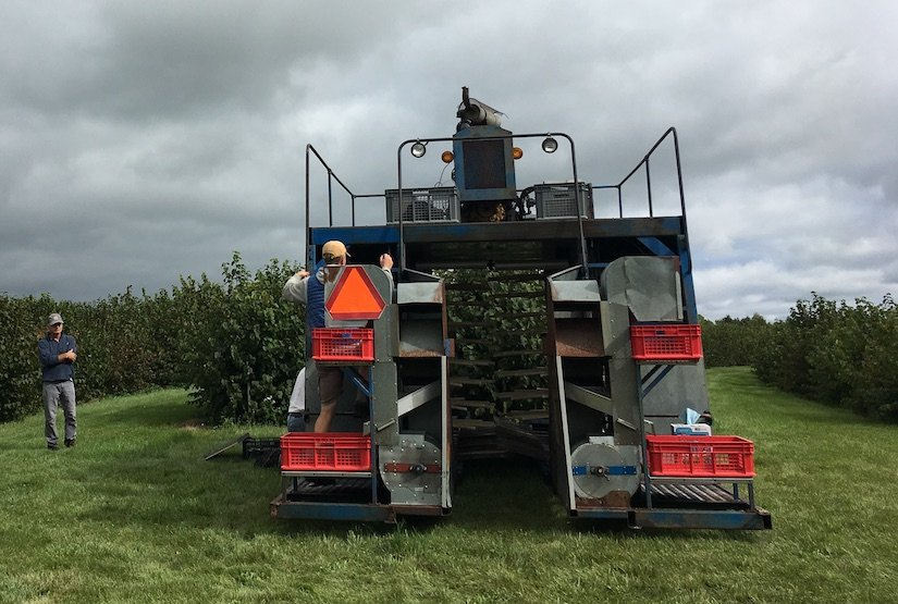 view of a hazelnut harvester